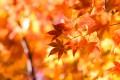 秋も深まる11月にふさわしい着物とは?